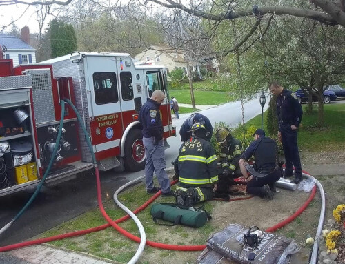 Two Dogs Rescued at Brawley Ave Structure Fire